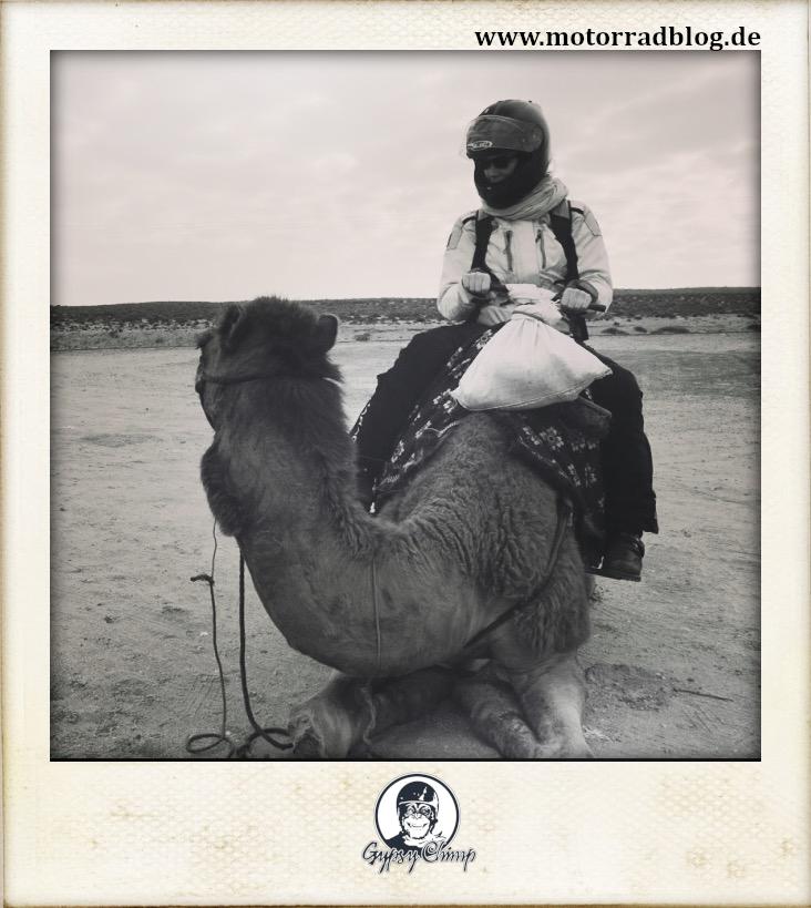 [Hier ist eigentlich ein Bild: Eine Motorradfahrerin in voller Montur mit Helm, die auf einem Kamel in Nordafrika sitzt.]