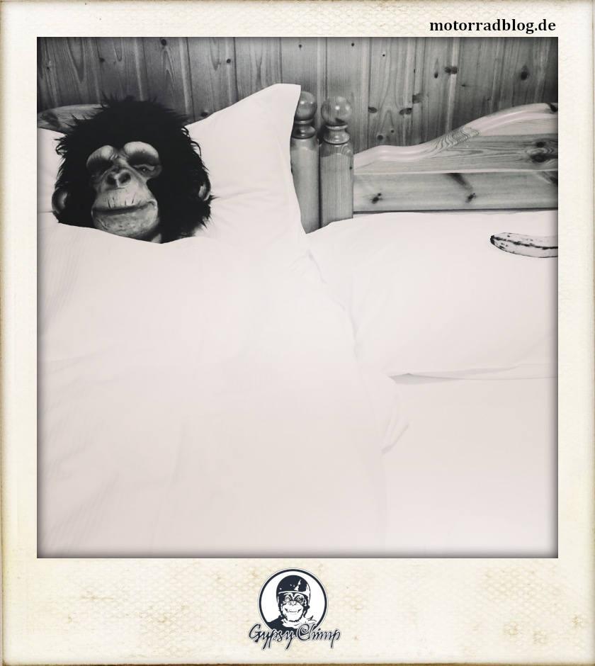 [Bild: Gypsy schläft | motorradblog.de]