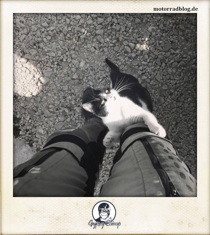 [Bild: Katze am Bein | motorradblog.de]